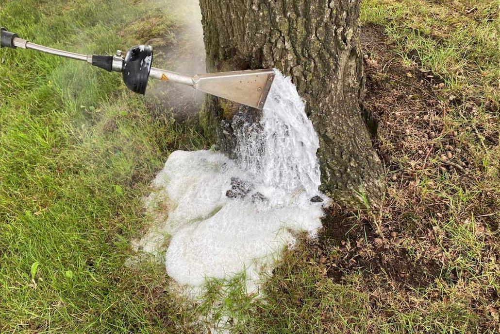 Eichenprozessionsspinner mit Schaum und Heißwasser bekämpfen