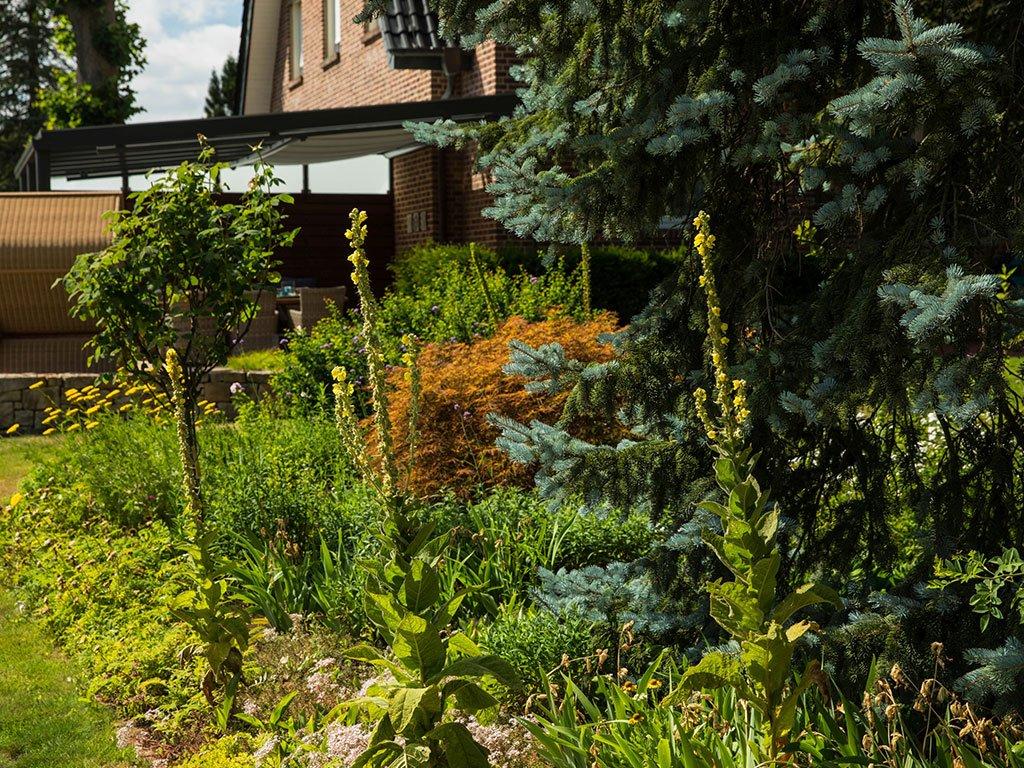 Klassischer Familiengarten Bramsche Bepflanzung