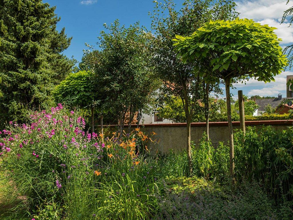 Klassischer Familiengarten Bramsche Pflanzen