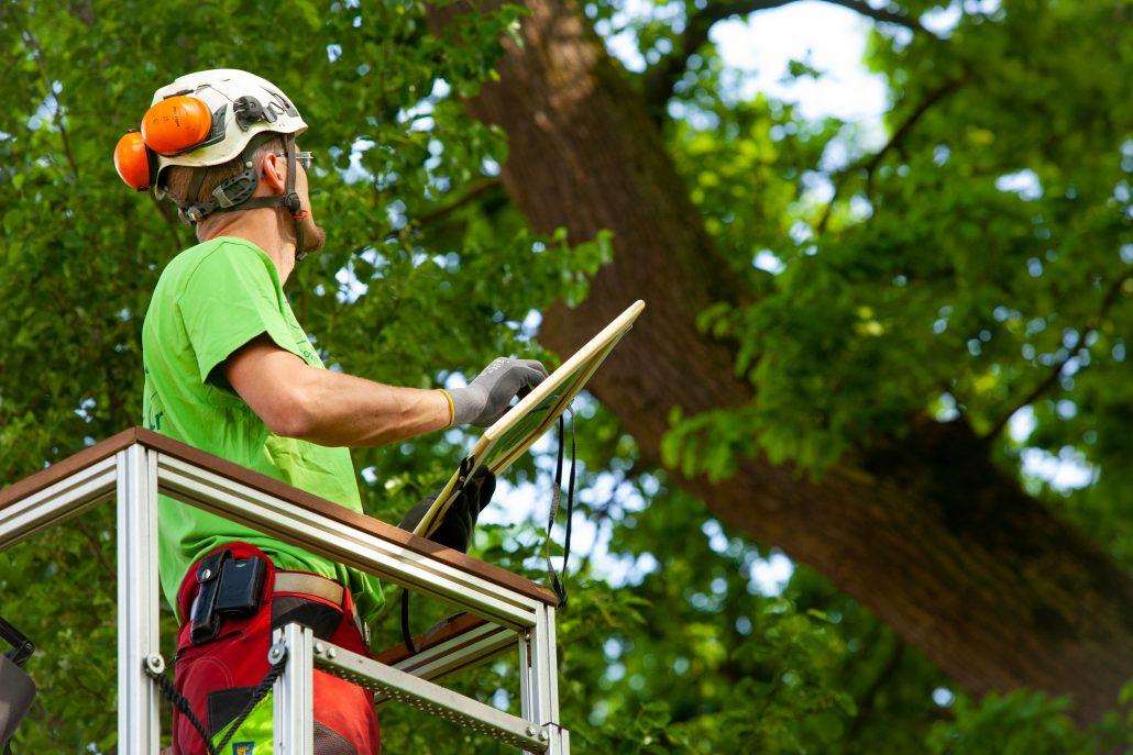 Baumkataster Baumkontrolle Baumgutachten im Raum Osnabrück Ibbenbüren Bramsche