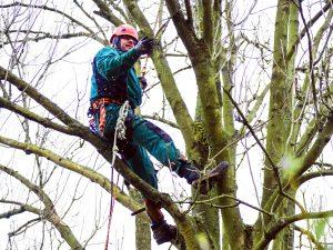 Foto Bäume Baumschutz auf Baustellen in Osnabrück Ibbenbüren und Bramsche Schutz von Bäumen