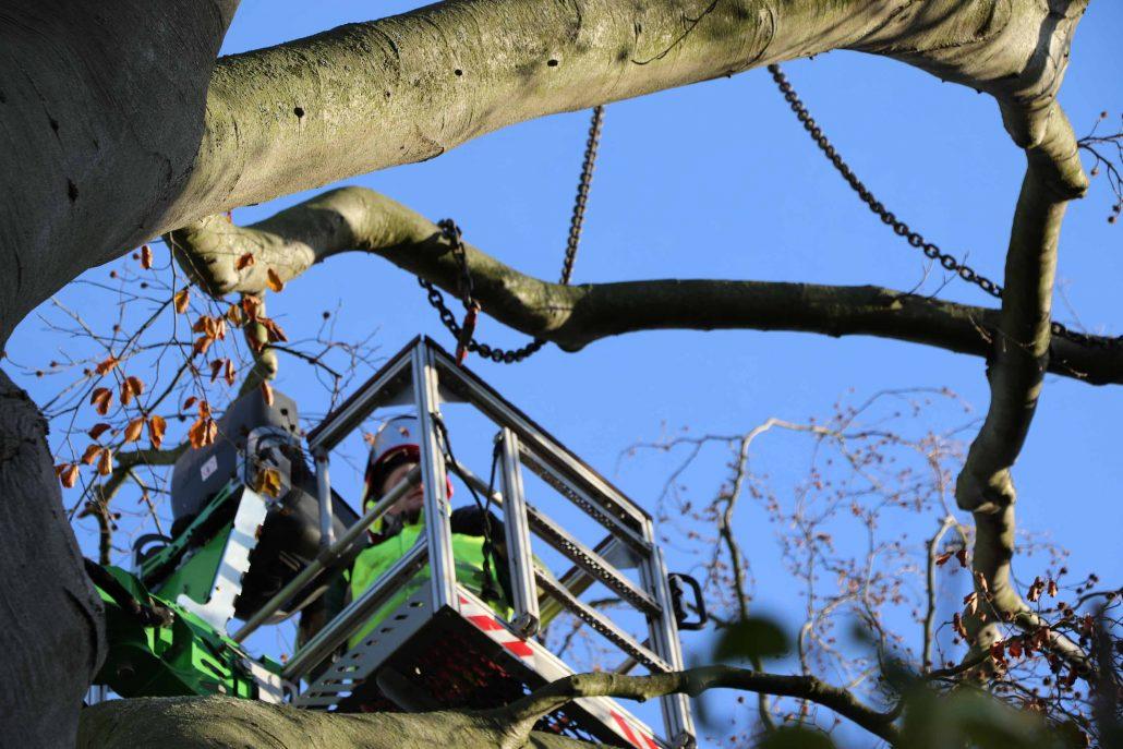 Kranfällung Baumfällung und Baumfällarbeiten - wir fällen auch Ihren Baum