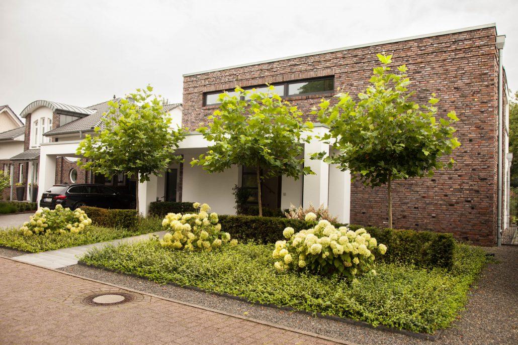 Vorgarten mit Dachplatanen