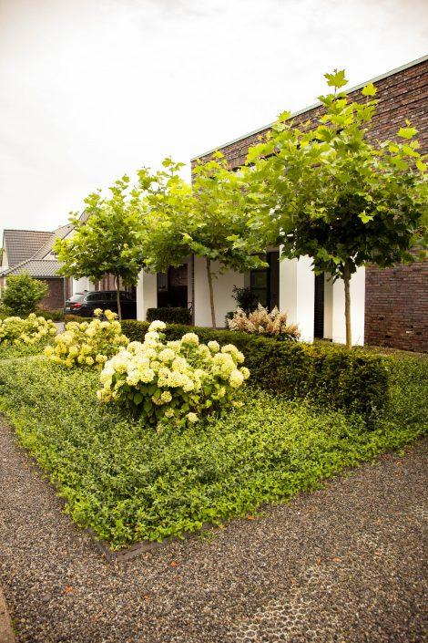 Vorgarten mit Hortensien